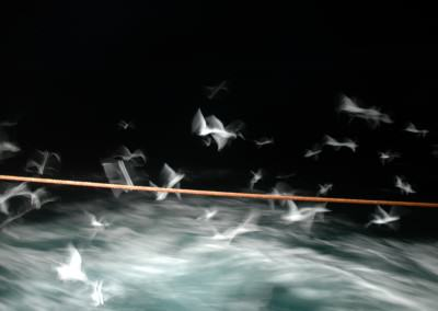 Harring at night