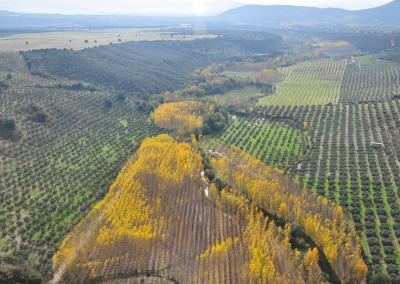 Autumn colors – Andalucia, Spain